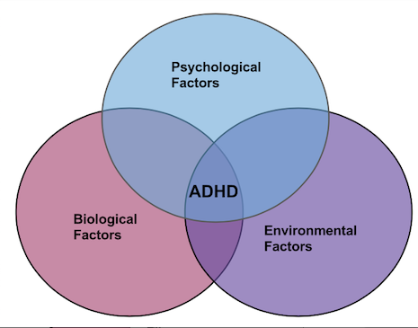 the pathophysiology of adhd Myadhdcom provides tools to improve the assessment and treatment of children, adolescents, and adults with adhd healthcare professionals, educators, parents, and adults can use assessment tools in diagnosing adhd tracking tools to monitor progress treatment tools to teach social skills, behavior, study habits, etc and library tools to.
