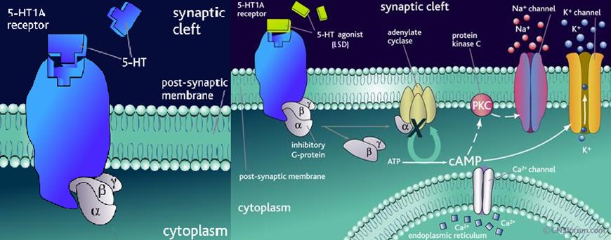 group_3_presentation_2_-_lysergic_acid_diethylamide_lsd - Wiki